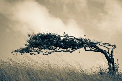 Wetterbaum