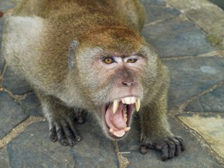 Zorn - die gefährlichste aller Emotionen - ICO ImpulseConsult Oberstdorf