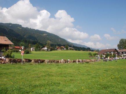 Viehscheid in Bolsterlang