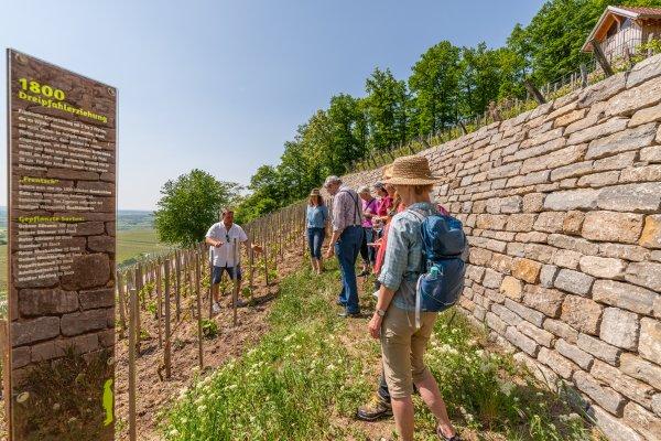Vom Bergwinzer mehr zum Geschichtsweinberg erfahren