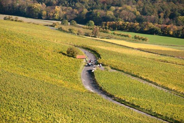 Spaziergang durch die Weinlage Kronsberg