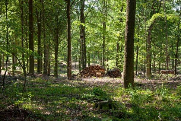 Mittelwald Iphofen