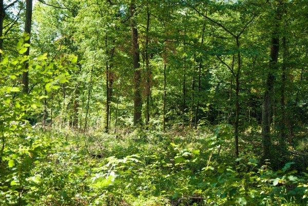 Iphöfer Wald