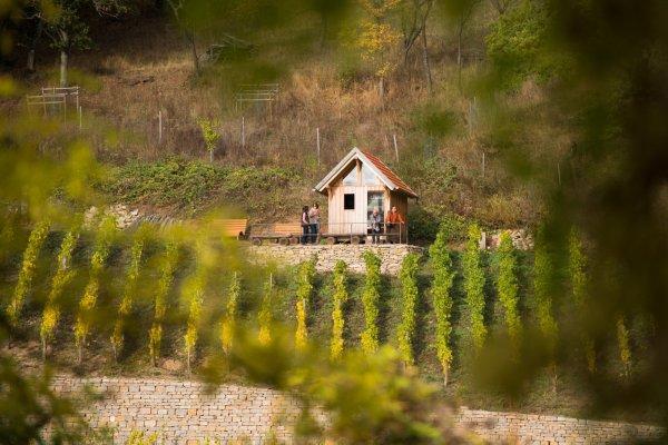 Geschichtsweinberg mit traditionellem Weinbergshäuschen