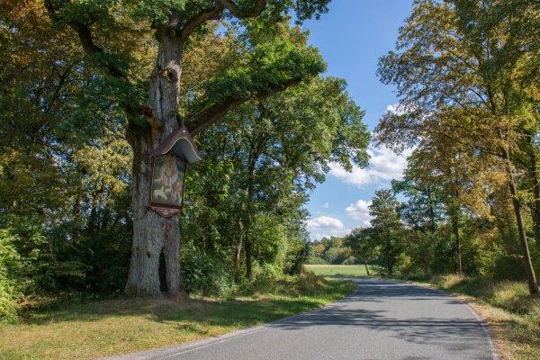 Naturdenkmal mit Wallfahrtsbild: Die Bildeiche
