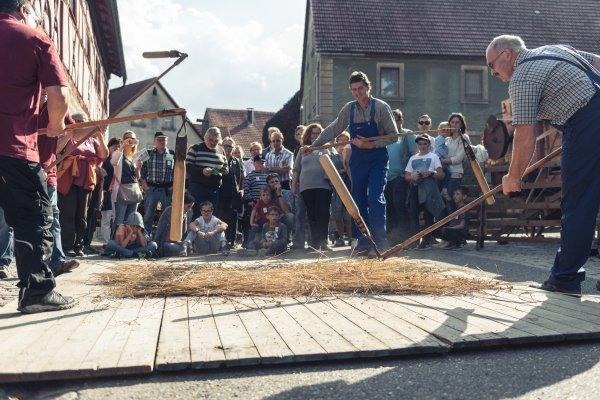 Dresch-Vorführung beim Kelterfest im Herbst