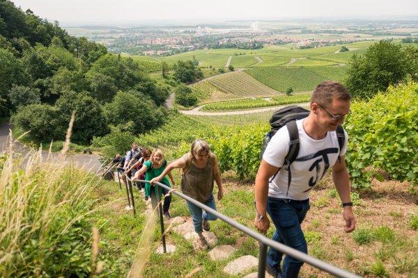 Steil bergauf geht's am Geschichtsweinberg