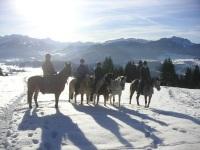 Unsere Pferde beim Sonnenbaden