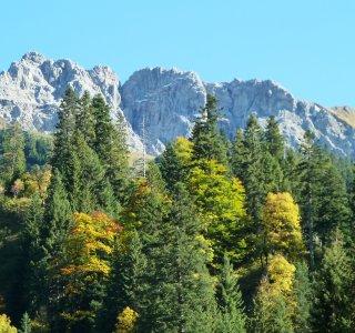 Bergwald und Felsgipfel im Allgäu