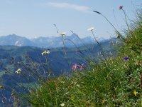 Frühlingswiese Allgäu