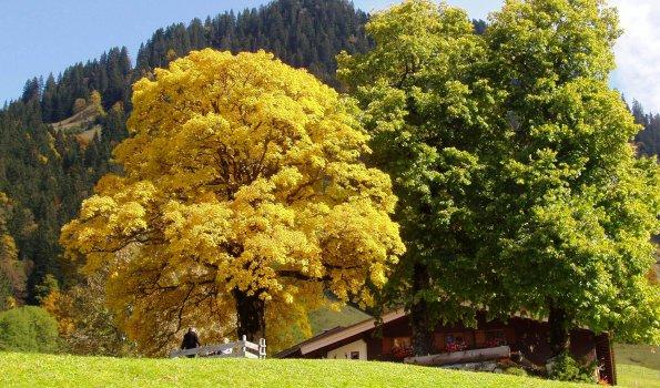 Herbst im Allgäu