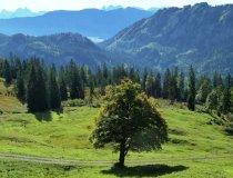Alpwiese bei Oberstdorf