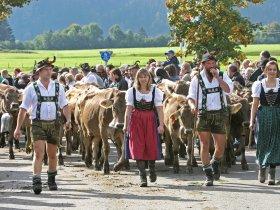 Viehscheid Bolsterlang g