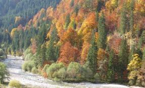 Herbstlicher Wald in Hinterstein Allgäu