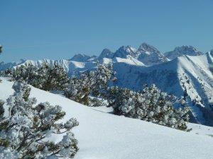 Winterlandschaft mit Latschenkiefern