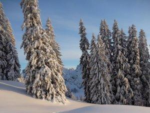 Winterwald im Allgäu