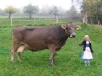 Kuh Romana mit Laura