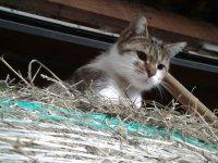 Katze Naomi