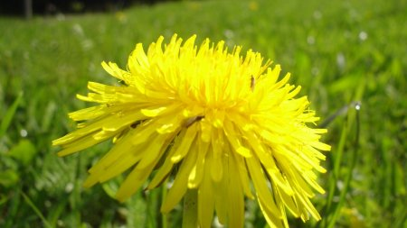 Der Frühling klopft an