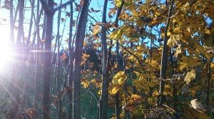 Wunderschöne Herbsttage ...