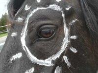 Kraft der Pferde