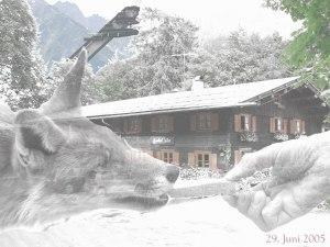Fuchs Laiter Hand Skiflugschanze
