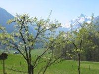 Frühling im Trettachtal