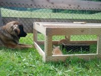 Berta und Kaninchen Juni 2019