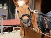 Pferde24'