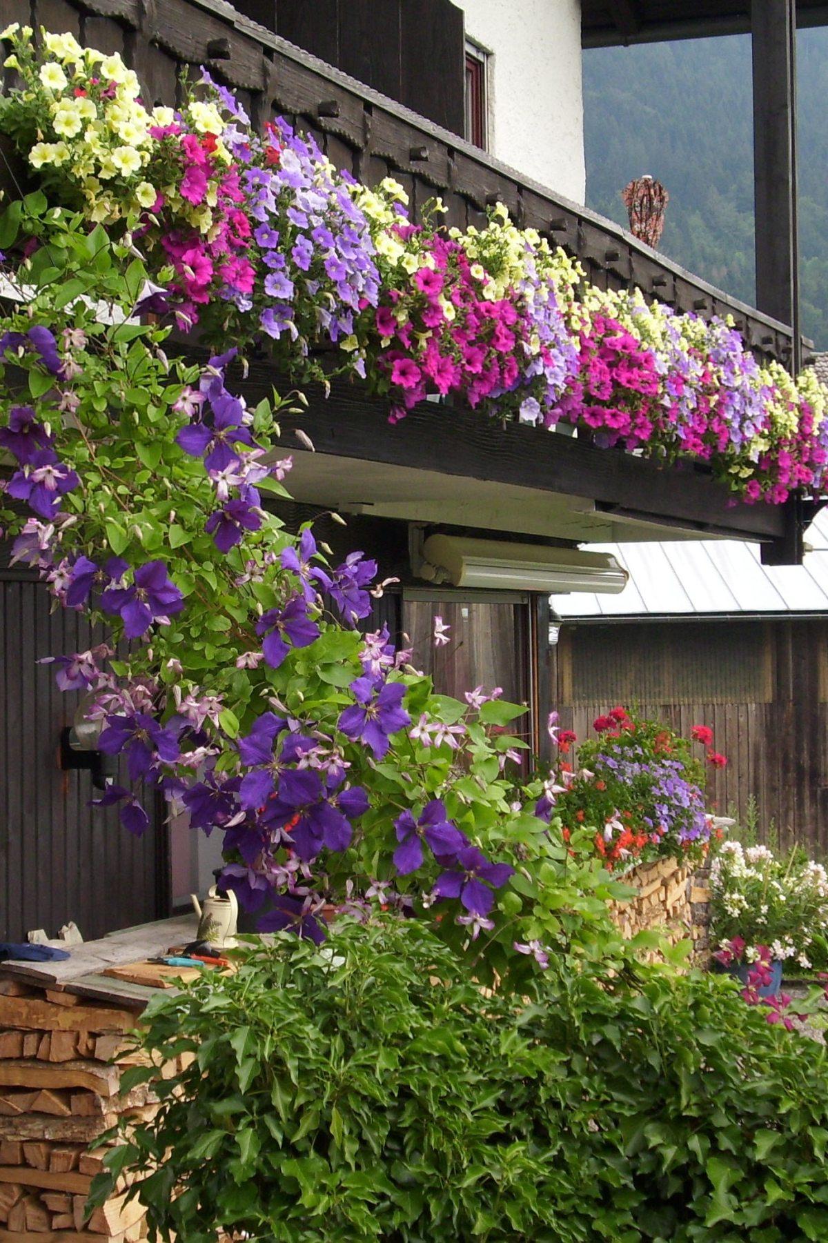 Prachtvoller Blumenschmuck am Haus