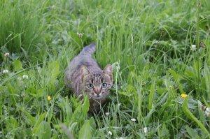 Unsere Katze Lilli