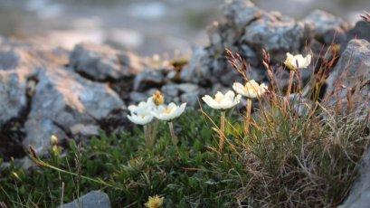 Kleinwalsertal-natur-bergblumen-gottesacker.jpg