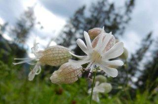 Kleinwalsertal-natur-bergblumen.jpg