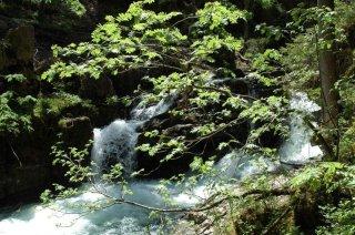 Natur-kleinwalsertal-sommer-naturbruecke.jpg