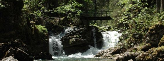 Wandern-kleinwalsertal-natur-erholung-naturbruecke.jpg