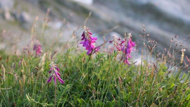 Wiesenblumen-natur-kleinwalsertal.jpg
