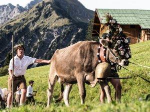 Der Alpsommer geht zu Ende (c) Frank Drechsel - Kleinwalsertal Tourismus eGen   Fotograf  Frank Drechsel
