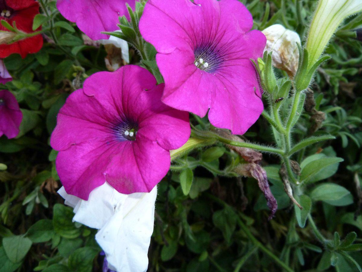 Blumen-Impression