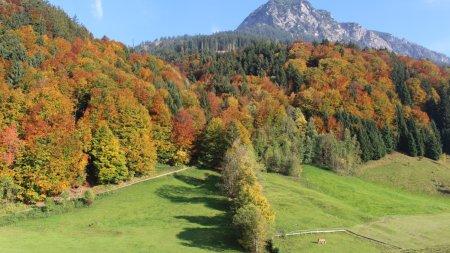 Herbstwald-Rubihorn