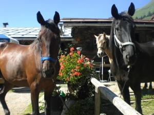 Ein Besuch mit den Pferden im Traufberg