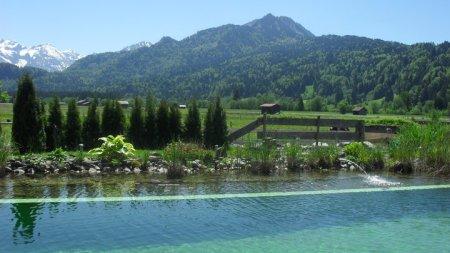 Unser Natur-Schwimmteich