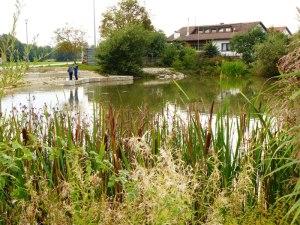 Badestelle am Dorfweiher Willenhofen