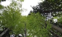 Forstangelegenheiten