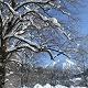 Kegelkopf im Winter