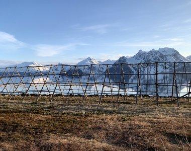 Trockenfischgestelle in Djupvik, Lyngen Alps im Hintergrund