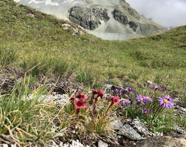 Wandern Alpen bunte Blumen