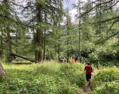 Wandern Alpen grüner Wald