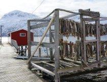 Lyngen Alps Trockenfischgestell auf Uløya