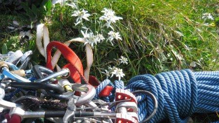 K-Klettern Material Edelweiss (1)