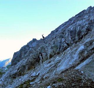 Wandern, Alpen, Steinbock